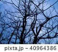 青い枝 40964386