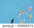 和紙の風合い 泳ぐ錦鯉 40969974