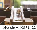 大牟田市動物園 モルモット、 40971422