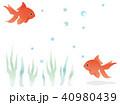 金魚 魚 淡水魚のイラスト 40980439