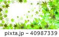 新緑 夏 葉のイラスト 40987339