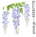藤 花 植物のイラスト 40987776