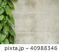 green leaf with white wall 40988346