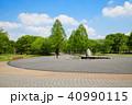 晴れ メタセコイア 新緑の写真 40990115