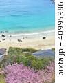 伊豆下田の白浜海岸 40995986