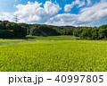 秋 実り 田んぼの写真 40997805