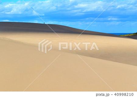 鳥取砂丘(とっとりさきゅう)の風紋(ふうもん)写真 40998210