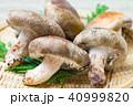 キノコ 椎茸 どんこ椎茸の写真 40999820
