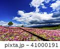 花畑 青空 満開の写真 41000191