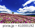 花畑 青空 満開の写真 41000192