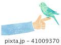 文鳥 41009370