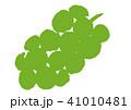 ぶどう 葡萄 水彩画  41010481