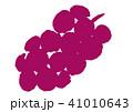 ぶどう 葡萄 果物のイラスト 41010643