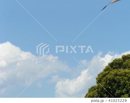初夏の青空と白い雲 41025229