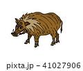イノシシのワイルドなイラスト 41027906