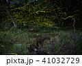蛍 昆虫 光跡の写真 41032729