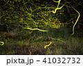 蛍 昆虫 光跡の写真 41032732