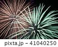 花火 菊 41040250