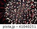 花火 菊 41040251