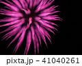 花火 菊 41040261