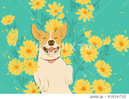 犬 狗 わんこ 41054710