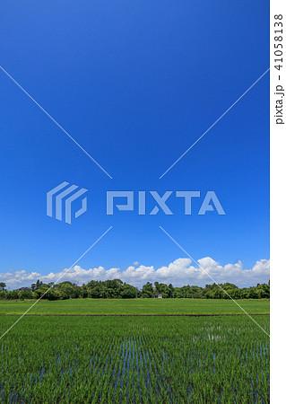 千葉県長生村の田園風景 41058138