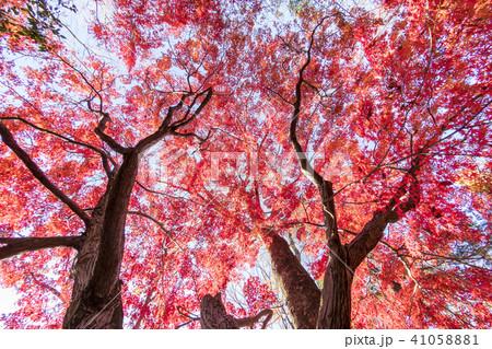 紅葉 秋の美しい風景 41058881