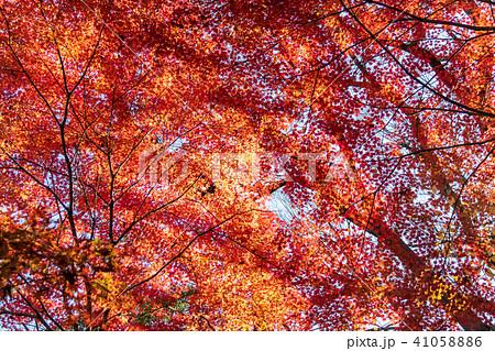 紅葉 秋の美しい風景 41058886