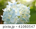 植物 自然風景 梅雨 アジサイ アヤメ 41060547