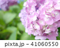 植物 自然風景 梅雨 アジサイ アヤメ 41060550