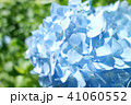 植物 自然風景 梅雨 アジサイ アヤメ 41060552