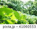 植物 自然風景 梅雨 アジサイ アヤメ 41060553