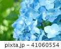 植物 自然風景 梅雨 アジサイ アヤメ 41060554