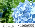 植物 自然風景 梅雨 アジサイ アヤメ 41060555