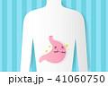 腹部 ボディ 身体のイラスト 41060750