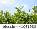青空とお茶の葉 41061988
