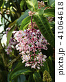 Pink flower background texture 41064618