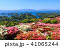 長串山つつじまつり 長串山公園 つつじの写真 41065244