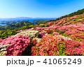 長串山つつじまつり 長串山公園 つつじの写真 41065249
