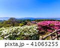 長串山つつじまつり 長串山公園 つつじの写真 41065255