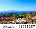 長串山つつじまつり 長串山公園 つつじの写真 41065257