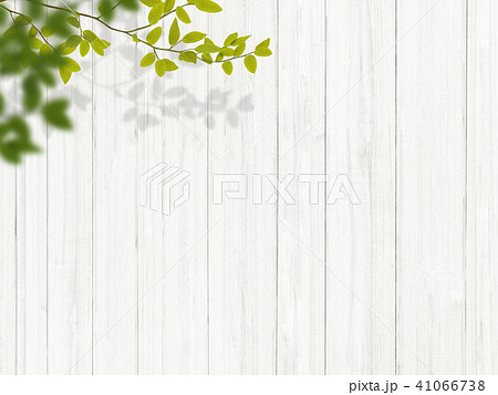 背景-植物-白壁 41066738