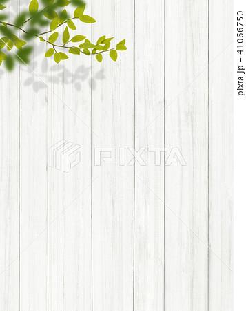 背景-植物-白壁 41066750