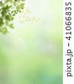 背景-新緑 41066835