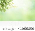 背景-新緑 41066850