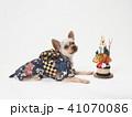 犬 門松 年賀状の写真 41070086