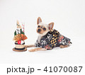 犬 門松 年賀状の写真 41070087