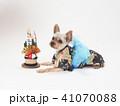 犬 門松 年賀状の写真 41070088