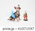 犬 門松 年賀状の写真 41071597