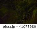 ホタルの乱舞 perming 季節の写真素材 41075980
